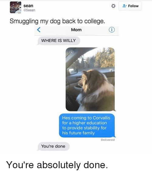Memes, Providence, and 🤖: Sean  S @5eean  Smuggling my dog back to college.  Mom  WHERE IS WILLY  Hes coming to Corvallis  for a higher education  to provide stability for  his future family  Delivered  You're done  Follow You're absolutely done.