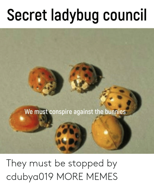 Bunnies: Secret ladybug council  We must conspire against the bunnies They must be stopped by cdubya019 MORE MEMES