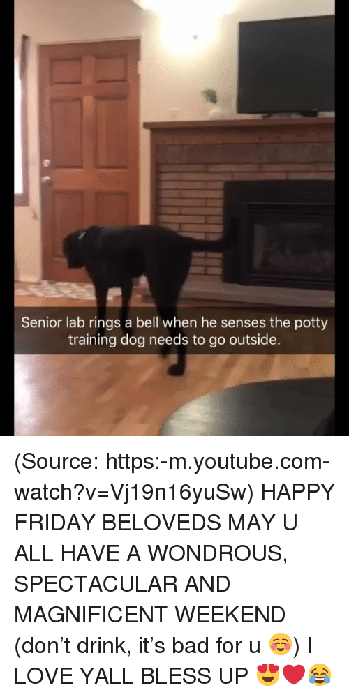 Bless up: Senior lab rings a bell when he senses the potty  training dog needs to go outside. (Source: https:-m.youtube.com-watch?v=Vj19n16yuSw) HAPPY FRIDAY BELOVEDS MAY U ALL HAVE A WONDROUS, SPECTACULAR AND MAGNIFICENT WEEKEND (don't drink, it's bad for u ☺️) I LOVE YALL BLESS UP 😍❤️😂