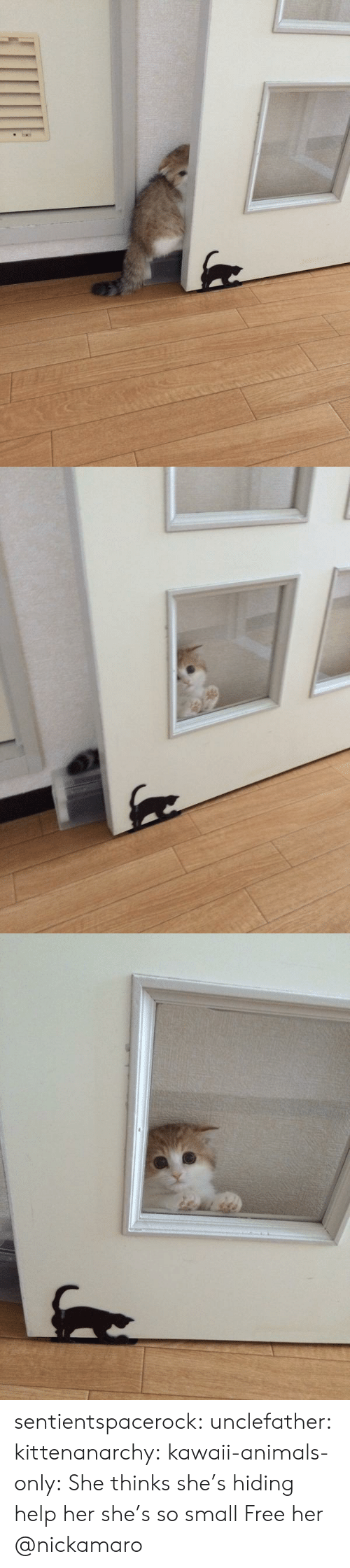 mco: sentientspacerock:  unclefather:  kittenanarchy:  kawaii-animals-only:  She thinks she's hiding  help her she's so small   Free her   @nickamaro