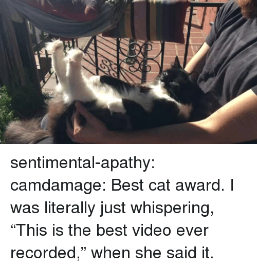 "Target, Tumblr, and Apathy: sentimental-apathy:  camdamage: Best cat award.  I was literally just whispering, ""This is the best video ever recorded,"" when she said it."