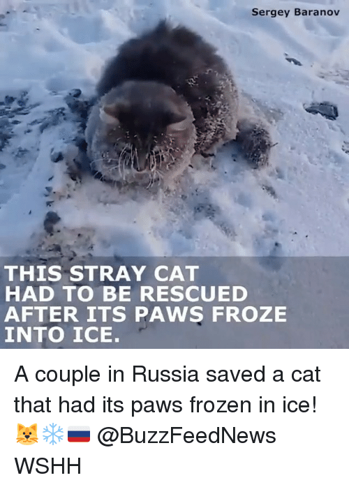 stray cats: Sergey Baranov  THIS STRAY CAT  HAD TO BE RESCUED  AFTER ITS PAWS FROZE  INTO ICE. A couple in Russia saved a cat that had its paws frozen in ice! 🐱❄️🇷🇺 @BuzzFeedNews WSHH