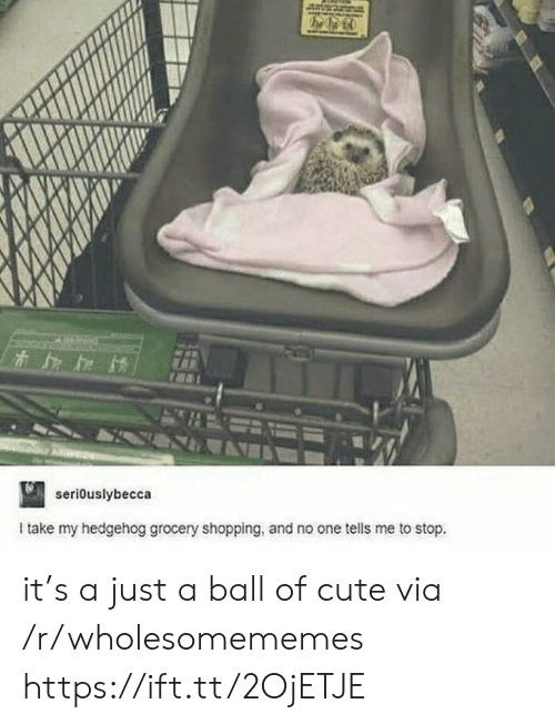 Hedgehog: seriouslybecca  Itake my hedgehog grocery shopping, and no one tells me to stop. it's a just a ball of cute via /r/wholesomememes https://ift.tt/2OjETJE