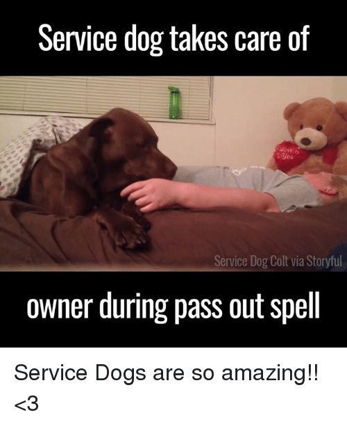 colt: Service dog takes care of  you  Service Dog  Colt via Storyful  owner during pass out spell Service Dogs are so amazing!! <3