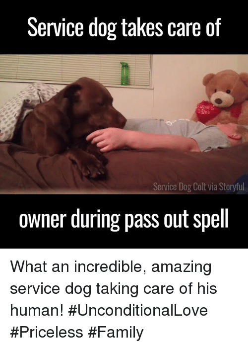 colt: Service dog takes care of  you  Service Dog  Colt via Storyful  owner during pass out spell What an incredible, amazing service dog taking care of his human! #UnconditionalLove #Priceless #Family