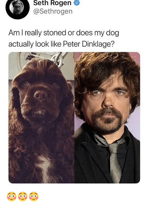 Peter Dinklage: Seth Rogen  @Sethrogen  Am I really stoned or does my dog  actually look like Peter Dinklage? 😳😳😳