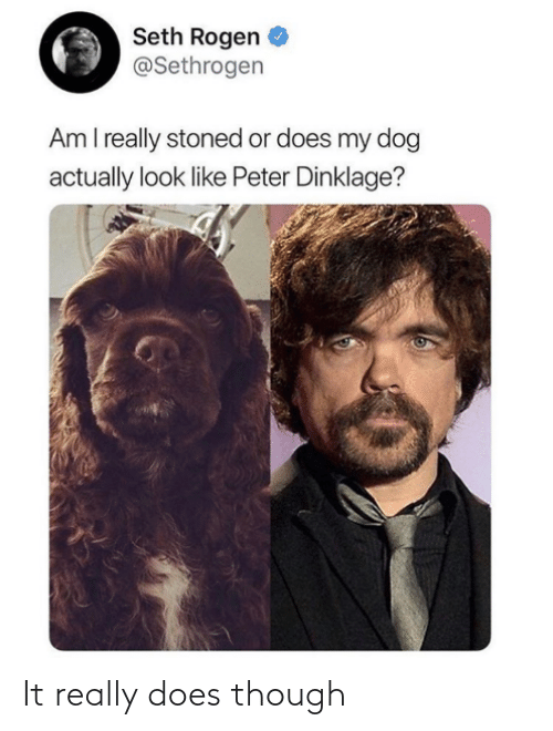 My Dog: Seth Rogen  @Sethrogen  Am I really stoned or does my dog  actually look like Peter Dinklage? It really does though