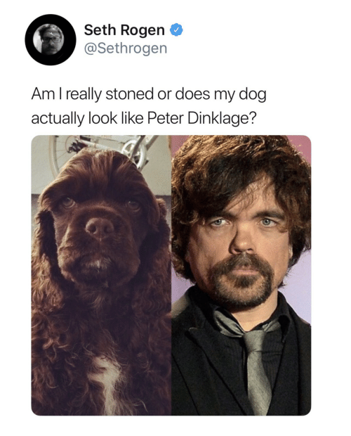 Peter Dinklage: Seth Rogen  @Sethrogen  Am l really stoned or does my dog  actually look like Peter Dinklage?