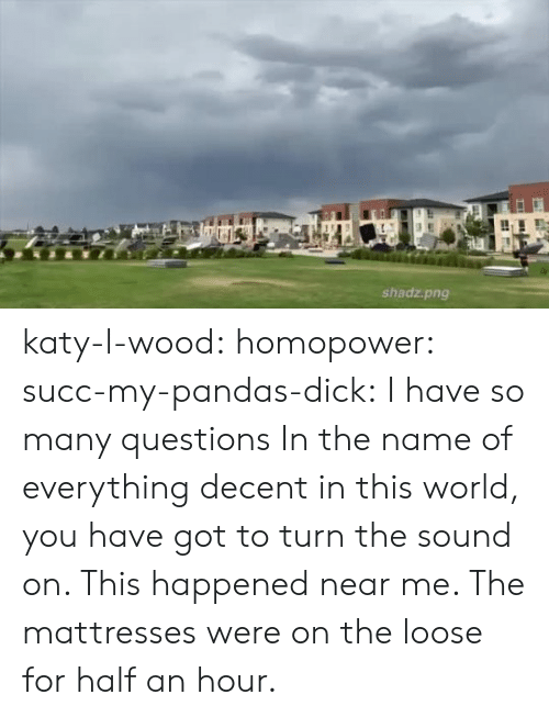 Tumblr, Blog, and Dick: shadz.png katy-l-wood: homopower:  succ-my-pandas-dick:  I have so many questions   In the name of everything decent in this world, you have got to turn the sound on.   This happened near me. The mattresses were on the loose for half an hour.