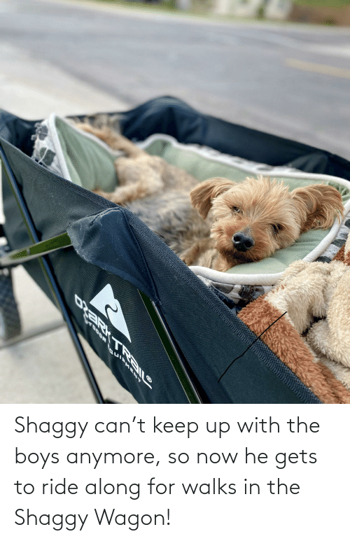 shaggy: Shaggy can't keep up with the boys anymore, so now he gets to ride along for walks in the Shaggy Wagon!