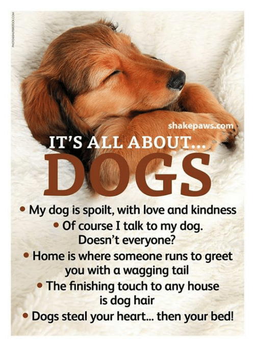 Memes, Touche, and 🤖: shake paws.com  IT'S ALL ABOUT.  My dog is spoilt, with love and kindness  Of course Italk to my dog.  Doesn't everyone?  Home is where someone runs to greet  you with a wagging tail  The finishing touch to any house  is dog hair  Dogs steal your heart... then your bed!