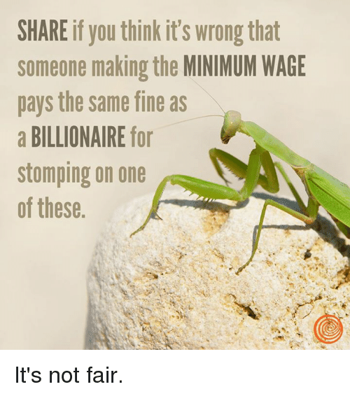 Its Not Fair: SHARE if you think it's wrong that  someone making the MINIMUM WAGE  pays the same fine as  a BILLIONAIRE for  stomping on one  of these It's not fair.