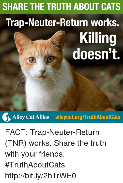 alley cats: SHARE THE TRUTH ABOUT CATS  Trap-Neuter-Return works.  Killing  doesn't.  Alley Cat Allies alleycat.org/TruthAboutCats FACT: Trap-Neuter-Return (TNR) works. Share the truth with your friends. #TruthAboutCats http://bit.ly/2h1rWE0