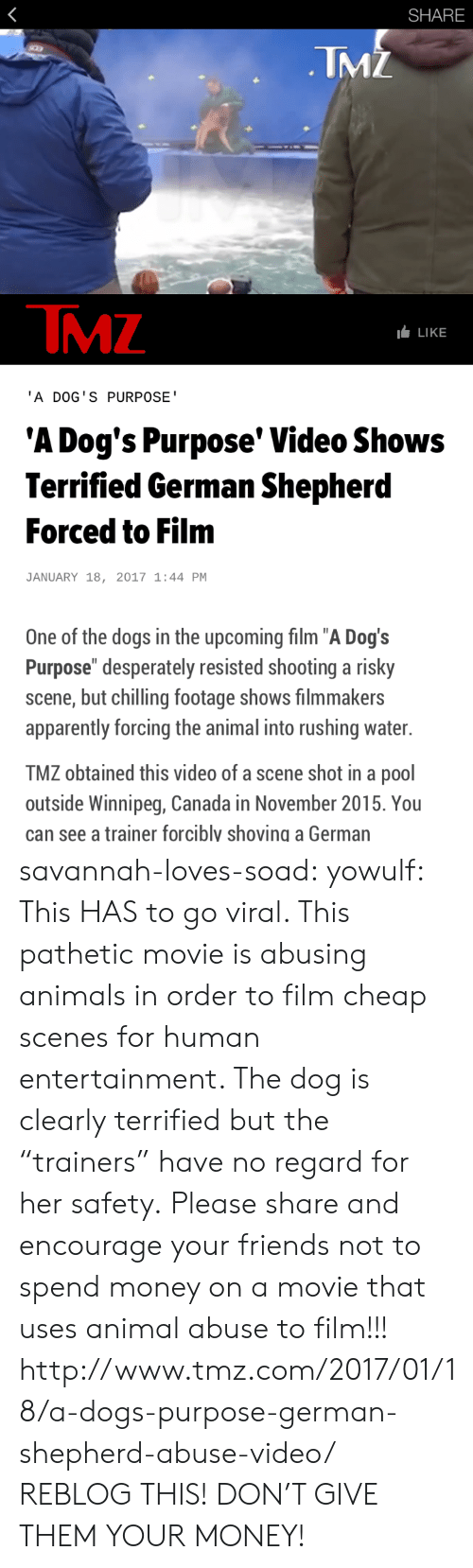 """Animal Abuse: SHARE  TMZ  TMZ  LLIKE  'A DOG'S PURPOSE  'A Dog's Purpose' Video Shows  Terrified German Shepherd  Forced to Film  JANUARY 18, 2017 1:44 PM  One of the dogs in the upcoming film """"A Dog's  Purpose"""" desperately resisted shooting a risky  scene, but chilling footage shows filmmakers  apparently forcing the animal into rushing water.  TMZ obtained this video of a scene shot in a pool  outside Winnipeg, Canada in November 2015. You  can see a trainer forcibly shoving a German savannah-loves-soad:  yowulf:  This HAS to go viral. This pathetic movie is abusing animals in order to film cheap scenes for human entertainment. The dog is clearly terrified but the """"trainers"""" have no regard for her safety.  Please share and encourage your friends not to spend money on a movie that uses animal abuse to film!!!  http://www.tmz.com/2017/01/18/a-dogs-purpose-german-shepherd-abuse-video/   REBLOG THIS! DON'T GIVE THEM YOUR MONEY!"""