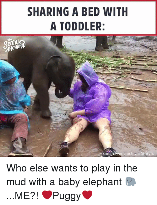 Baby Elephant: SHARING A BED WITH  A TODDLER:  ann  nchick via Storyful Who else wants to play in the mud with a baby elephant 🐘 ...ME?! ❤️Puggy❤️