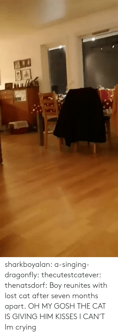 Crying, Gif, and Singing: sharkboyalan:  a-singing-dragonfly:  thecutestcatever:  thenatsdorf: Boy reunites with lost cat after seven months apart.   OH MY GOSH THE CAT IS GIVING HIM KISSES I CAN'T  Im crying
