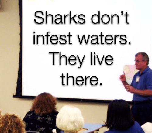 They Live: Sharks don't  infest waters.  They live  there