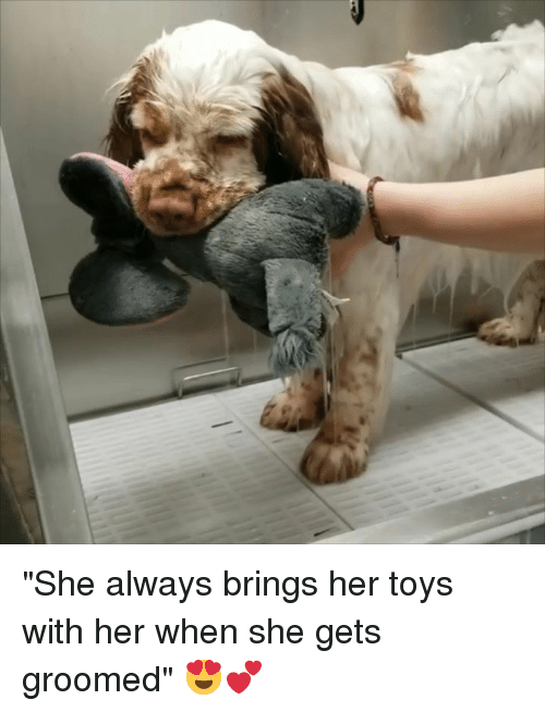 """Groomed: """"She always brings her toys with her when she gets groomed"""" 😍💕"""