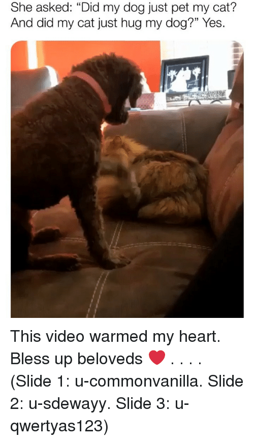 "Bless up: She asked: ""Did my dog just pet my cat?  And did my cat just hug my dog?"" Yes. This video warmed my heart. Bless up beloveds ❤️ . . . . (Slide 1: u-commonvanilla. Slide 2: u-sdewayy. Slide 3: u-qwertyas123)"