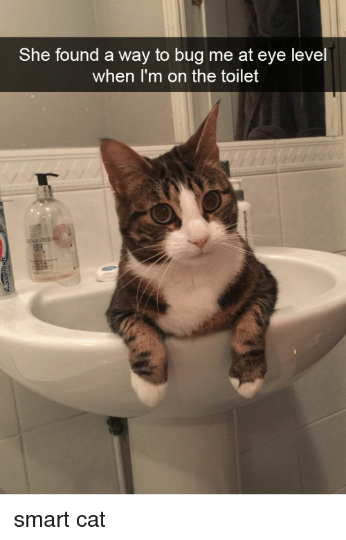 Funny, Cat, and Eye: She found a way to bug me at eye level  when I'm on the toilet smart cat