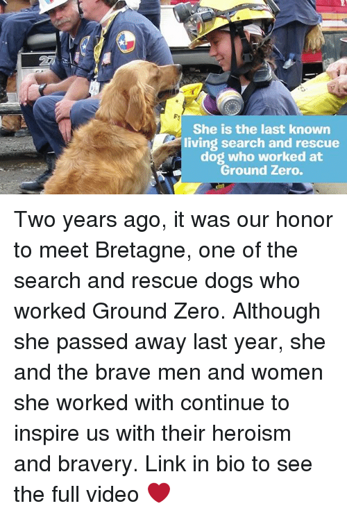 dogging: She is the last known  living search and rescue  dog who worked at  Ground Zero. Two years ago, it was our honor to meet Bretagne, one of the search and rescue dogs who worked Ground Zero. Although she passed away last year, she and the brave men and women she worked with continue to inspire us with their heroism and bravery. Link in bio to see the full video ❤️