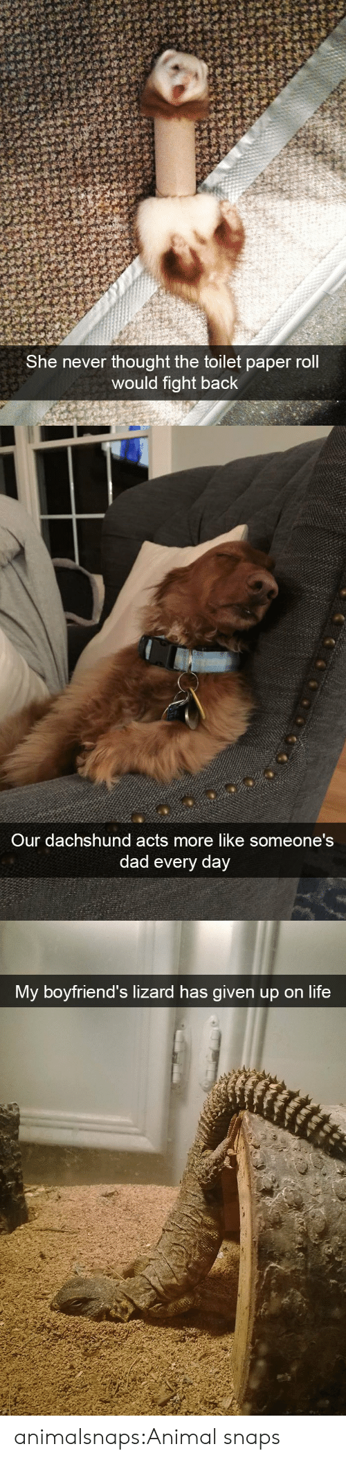 Dad, Life, and Target: She never thought the toilet paper roll  would fight back   Our dachshund acts more like someone's  dad every day   My boyfriend's lizard has given up on life animalsnaps:Animal snaps