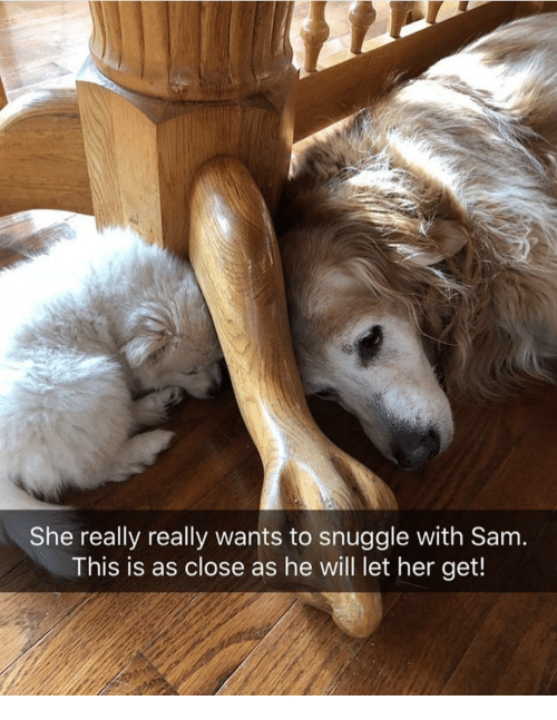 Memes, 🤖, and Her: She really really wants to snuggle with Sam  This is as close as he will let her get!