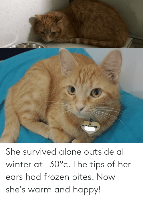 ears: She survived alone outside all winter at -30°c. The tips of her ears had frozen bites. Now she's warm and happy!