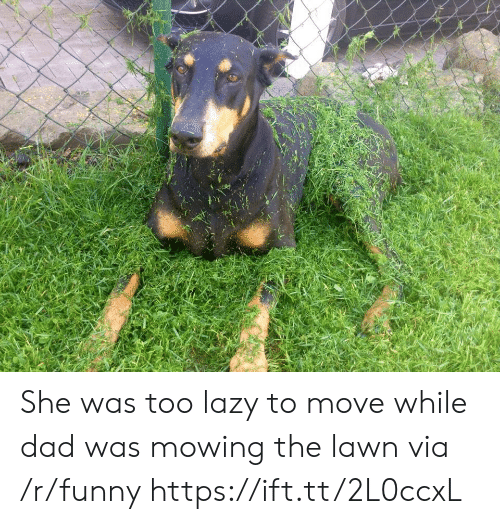 Mowing: She was too lazy to move while dad was mowing the lawn via /r/funny https://ift.tt/2L0ccxL