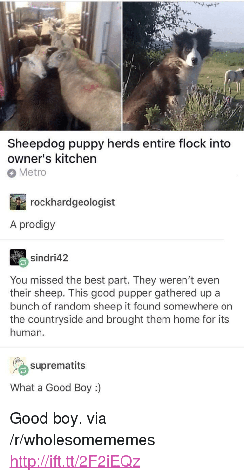 """sheepdog: Sheepdog puppy herds entire flock into  owner's kitchen  Metro  rockhardgeologist  A prodigy  sindri42  You missed the best part. They weren't even  their sheep. This good pupper gathered up a  bunch of random sheep it found somewhere on  the countryside and brought them home for its  human.  suprematits  What a Good Boy :) <p>Good boy. via /r/wholesomememes <a href=""""http://ift.tt/2F2iEQz"""">http://ift.tt/2F2iEQz</a></p>"""