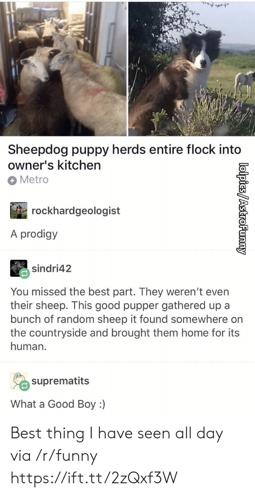 sheepdog: Sheepdog puppy herds entire flock into  owner's kitchen  Metro  rockhardgeologist  A prodigy  sindri42  You missed the best part. They weren't even  their sheep. This good pupper gathered up a  bunch of random sheep it found somewhere on  the countryside and brought them home for its  human.  suprematits  What a Good Boy :) Best thing I have seen all day via /r/funny https://ift.tt/2zQxf3W