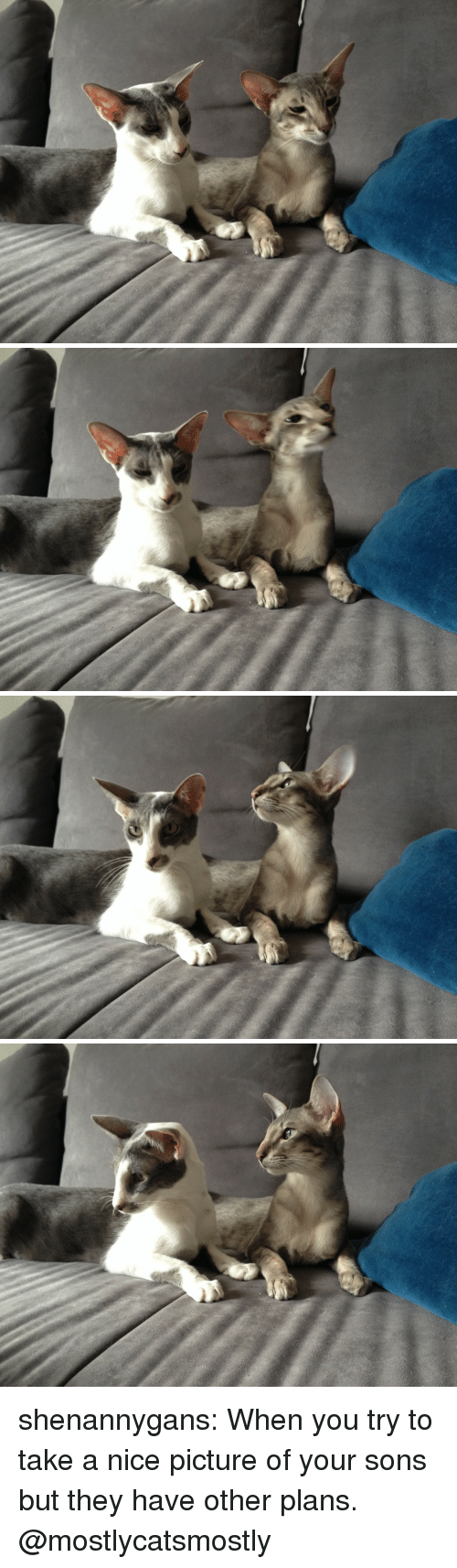 Nice Picture: shenannygans: When you try to take a nice picture of your sons but they have other plans. @mostlycatsmostly