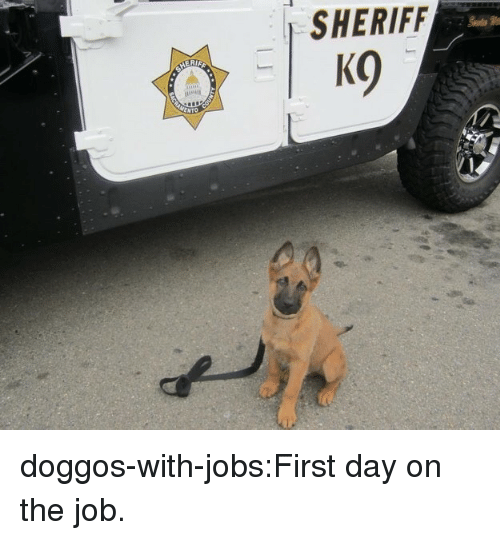 Tumblr, Blog, and Jobs: SHERIFF doggos-with-jobs:First day on the job.