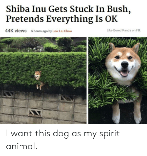 Shiba Inu: Shiba Inu Gets Stuck In Bush,  Pretends Everything Is OK  44K views  5 hours ago by Low Lai Chow  Like Bored Panda on FB I want this dog as my spirit animal.