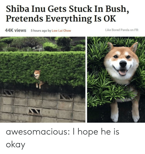 Shiba Inu: Shiba Inu Gets Stuck In Bush,  Pretends Everything Is OK  44K views  5 hours ago by Low Lai Chow  Like Bored Panda on FB awesomacious:  I hope he is okay