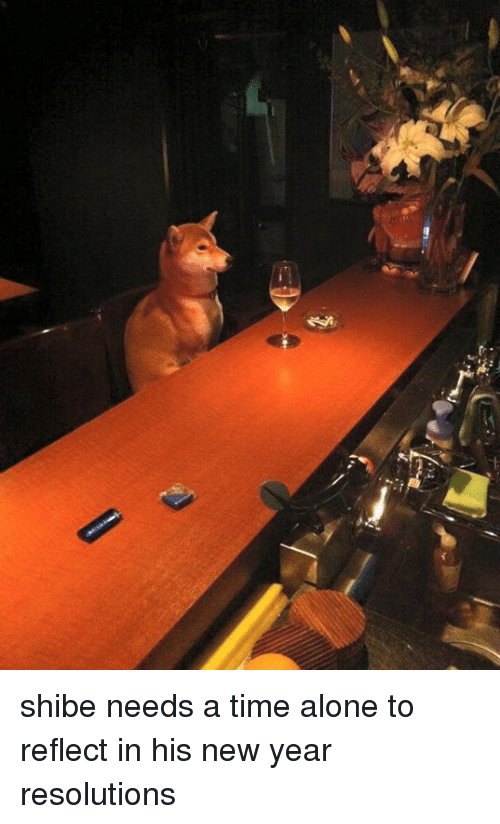 shibe: shibe needs a time alone to reflect in his new year resolutions