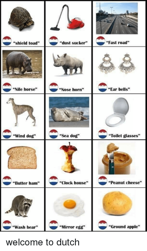 """sucker: """"shield toad""""  """"dust sucker""""  """"Fast road""""  """"Nile horse""""  """"Nose horn""""  """"Ear bells""""  ^  """"Wind dog""""  """"Sea dog""""  -  """"Toilet glasses""""  """"Butter ham""""  """"clock house""""  ▼