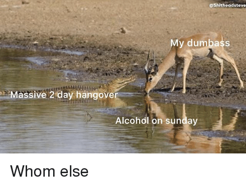 Alcohol, Sunday, and Dank Memes: @Shitheadsteve  y dumbass  Massive 2 day hangove  Alcohol on sunday Whom else