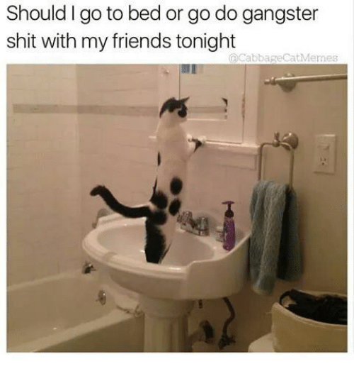Friends, Shit, and Gangster: Should I go to bed or go do gangster  shit with my friends tonight  CabbageCatMemes