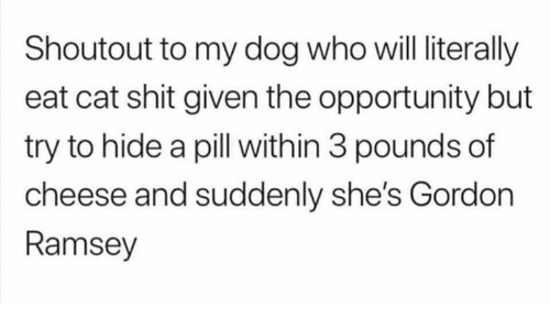 Dank, Shit, and Opportunity: Shoutout to my dog who will literally  eat cat shit given the opportunity but  try to hide a pill with in 3 pounds of  cheese and suddenly she's Gordon  Ramsey