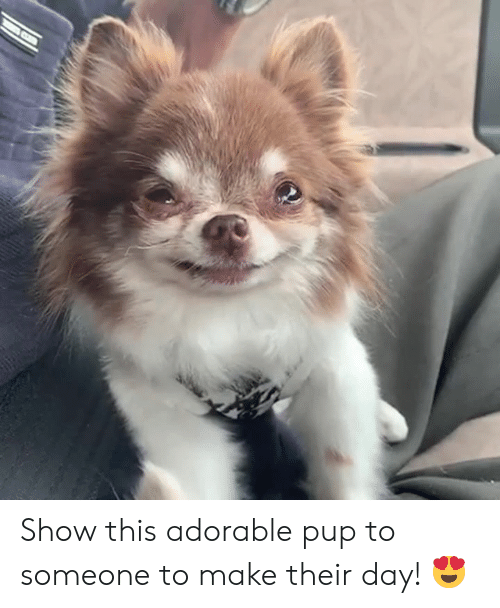 Pup, Adorable, and Day: Show this adorable pup to someone to make their day! 😍
