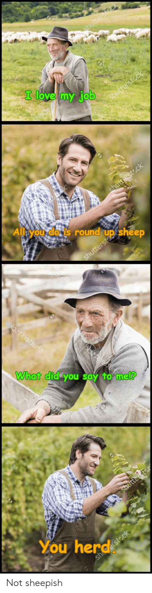 round up: shutterstack  I love my job  shutterstock  ssk  Alleyou do is round up sheep  shutterst.ck  hutterst  What did you say to mel?  Shetter t  You herdsteck Not sheepish