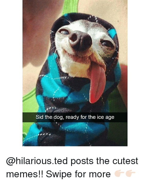sids: Sid the dog, ready for the ice age @hilarious.ted posts the cutest memes!! Swipe for more 👉🏻👉🏻