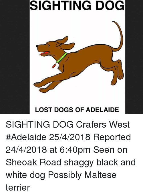 Dogs, Memes, and Lost: SIGHTING DOG  LOST DOGS OF ADELAIDE SIGHTING DOG Crafers West #Adelaide 25/4/2018 Reported 24/4/2018 at 6:40pm Seen on Sheoak Road  shaggy black and white dog Possibly Maltese terrier