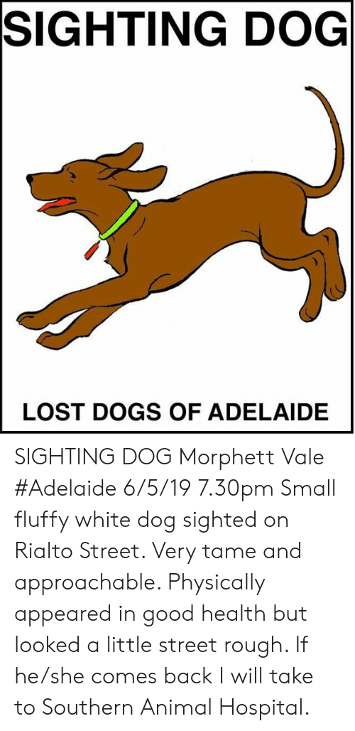 rialto: SIGHTING DOG  LOST DOGS OF ADELAIDE SIGHTING DOG Morphett Vale #Adelaide 6/5/19 7.30pm Small fluffy white dog sighted on Rialto Street. Very tame and approachable. Physically appeared in good health but looked a little street rough. If he/she comes back I will take to Southern Animal Hospital.