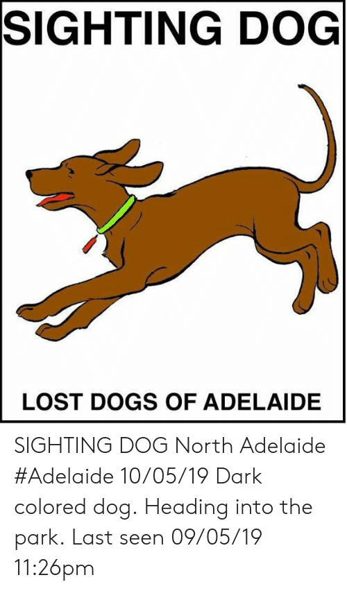 Dogs, Memes, and Lost: SIGHTING DOG  LOST DOGS OF ADELAIDE SIGHTING DOG North Adelaide #Adelaide 10/05/19 Dark colored dog. Heading into the park. Last seen 09/05/19 11:26pm