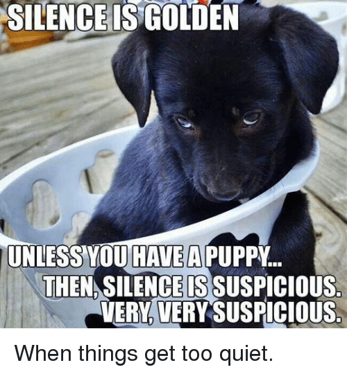Too Quiet: SILENCE IS GOLDEN  UNLESS OU HAVE  THENASILENCE ISSUSPICIOUS.  VERY VERY SUSPICIOUS When things get too quiet.