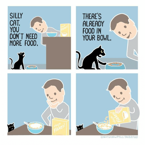 Food, Buzzfeed, and Bowl: SILLY  CAT  You .  DON'T NEED  MORE FOOD  THERES  ALREADY  FOOD IN  YOUR BOWL.  ONATHANWPYLE/ BUZZFEED