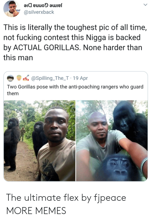 Dank, Flexing, and Fucking: @silverxback  This is literally the toughest pic of all time,  not fucking contest this Nigga is backed  by ACTUAL GORILLAS. None harder than  this man  aSpilling.The_T 19 Apr  Two Gorillas pose with the anti-poaching rangers who guard  them The ultimate flex by fjpeace MORE MEMES