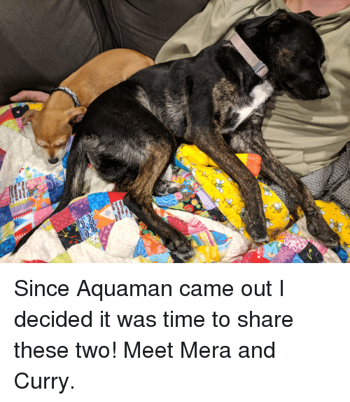 Time, Aquaman, and Curry: Since Aquaman came out I decided it was time to share these two! Meet Mera and Curry.
